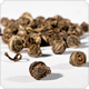 Jasmine Pearls [numis-20580.jpg] - Click for More Information